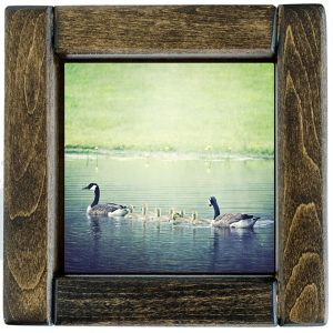 Framed Baby Geese Photo Tile