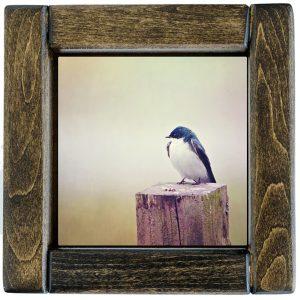 Framed Barn Swallow Photo Tile
