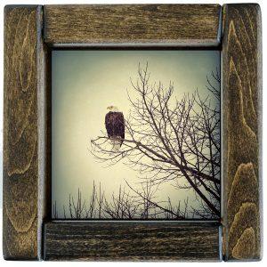 Bald Eagle Tile in Handcrafted Hardwood Frame