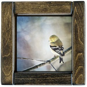 Framed Goldfinch Photo Tile
