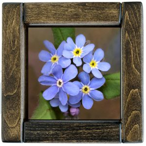 Forget-Me-Nots Tile Framed