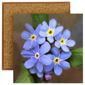 Forget-Me-Nots Tile with Cork