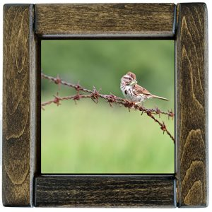 Framed Sparrow on a Wire Photo Tile
