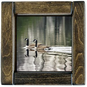 Framed Swimming Geese Photo Tile
