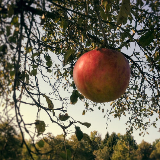 Red Apple Photo Tile