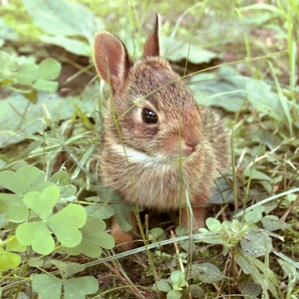 Baby Bunny Rabbit Photo Tile