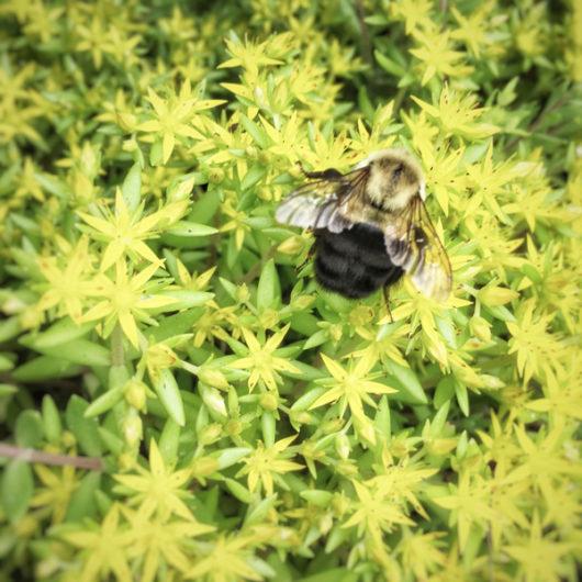Bumblebee Photo Tile