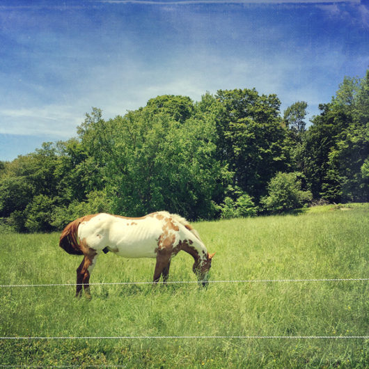Dappled Horse Photo Tile