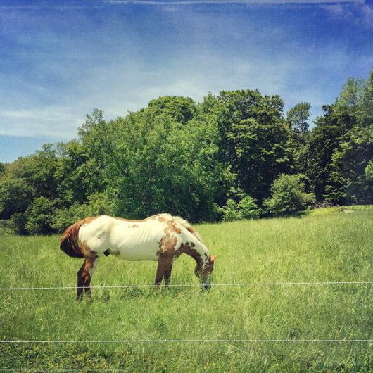 Dappled Horse Photo Tile