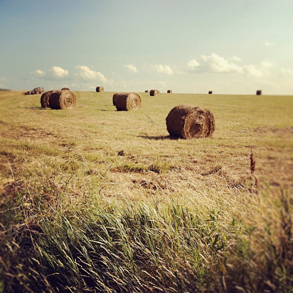 Field with Round Hay Bales Photo Tile