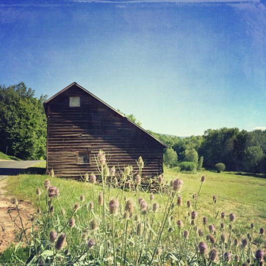 Barn with Teasel Photo Tile